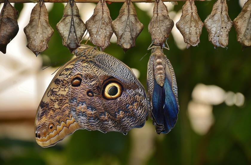 Pivot butterfly